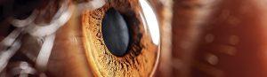 leon ocular clinica oftalmologica