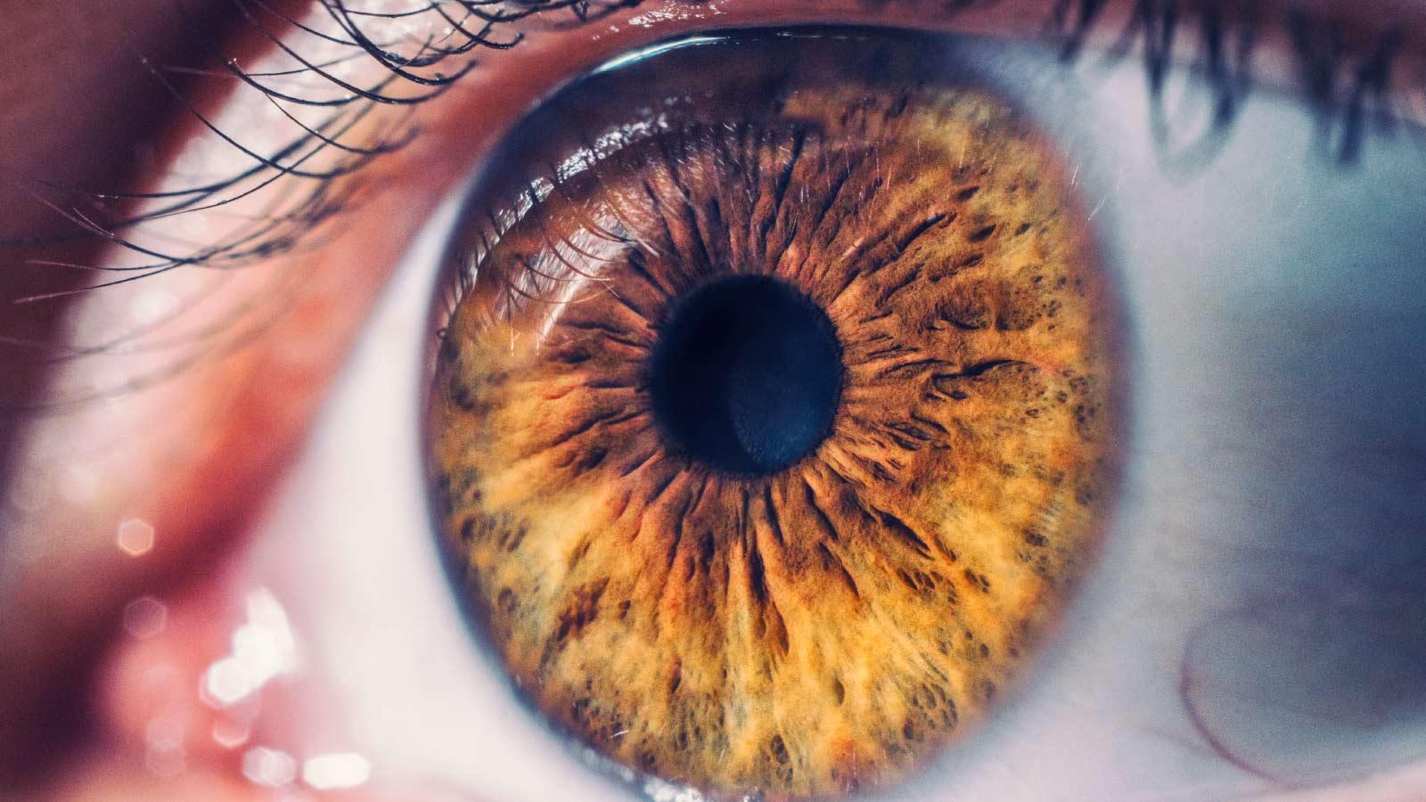 retina-medica-tratamiento-leon
